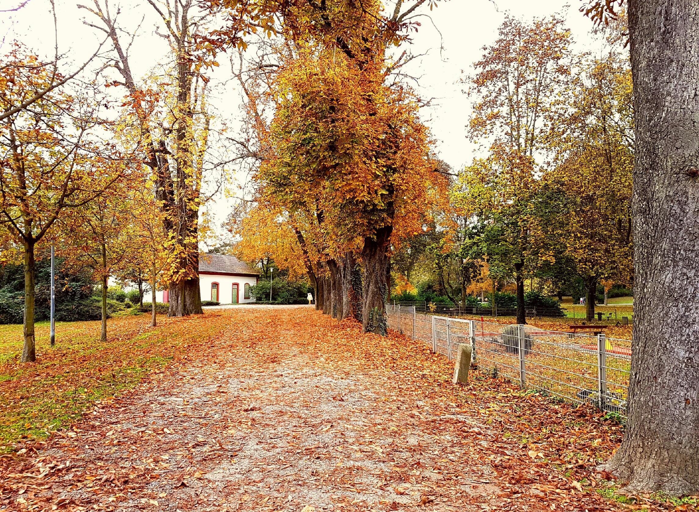 Es kam der Herbst…